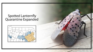 Spotted Lanternfly Quarantine Expanded
